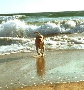 Dog Beach Game On1