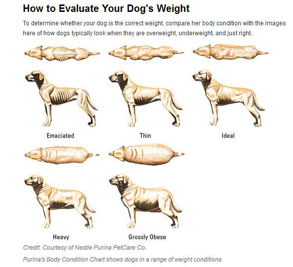 weight loss on obese dog