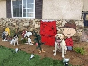 Charlie Brown and Crew