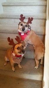 dog-is-my-reindeer
