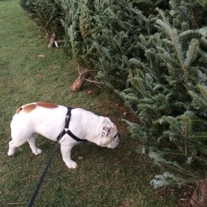 tree-inspection