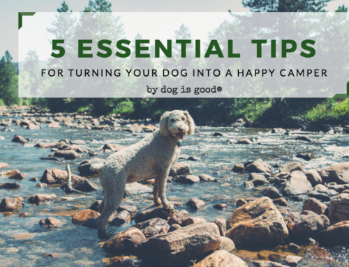 5 Tips for Turning your Dog into a Happy Camper!