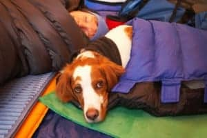 what to pack when you camp with a dog