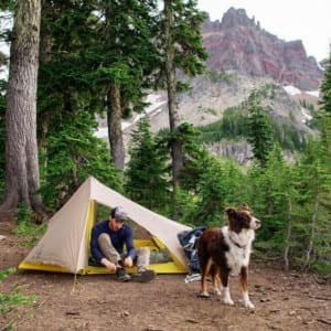do research before going to a camp ground with a dog