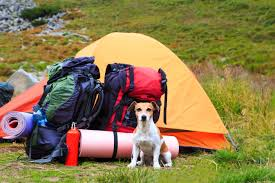 use a tent when you camp with a dog