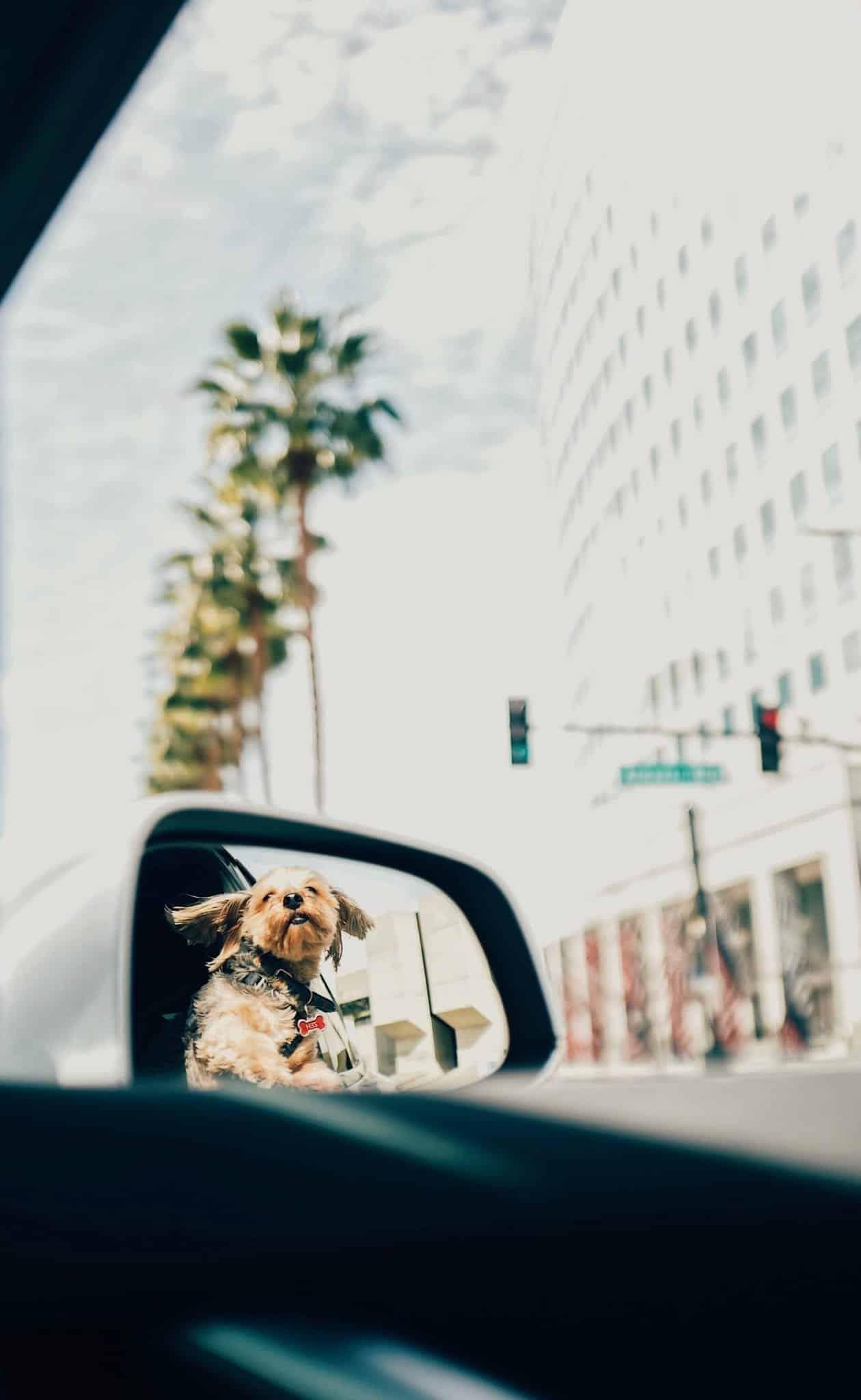 dog-friendly car ride