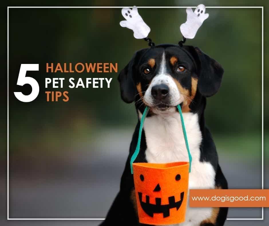 5 Halloween Pet Safety Tip – Blog
