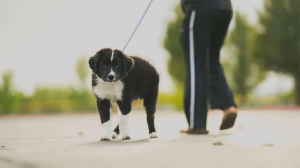 5 reasons to walk a dog