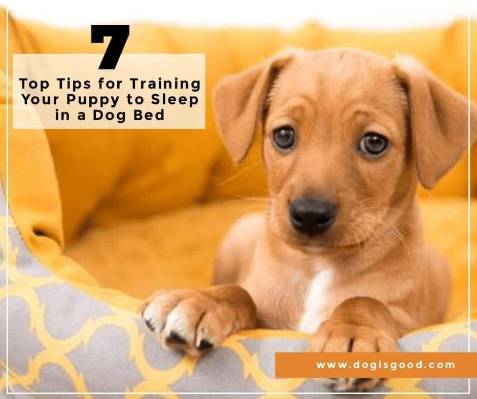 Top 7 Tips for Training Your Puppy to Sleep in a Dog Bed