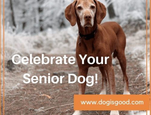 How To Celebrate The Senior Dog