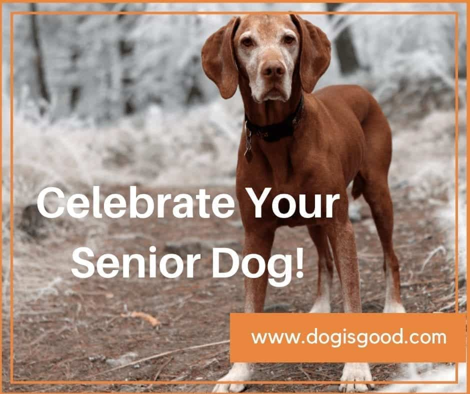 celebrate the senior dog