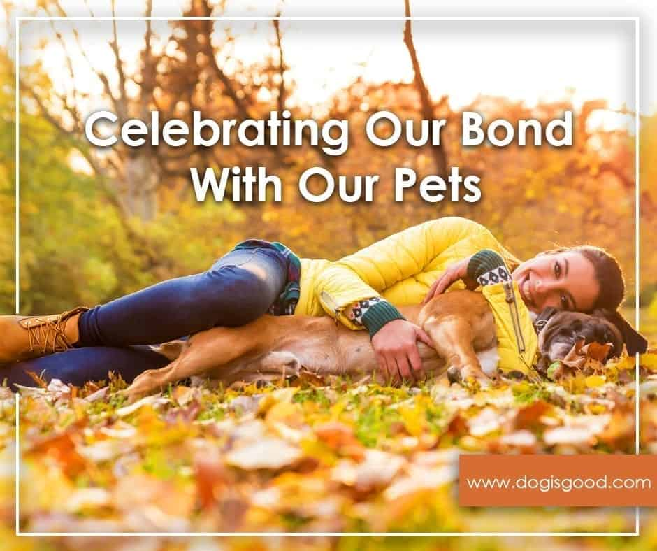 celebrate your bond with your pet