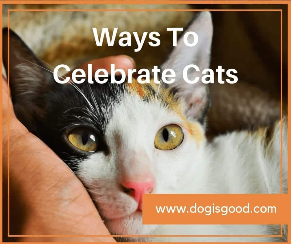 how to celebrate cats