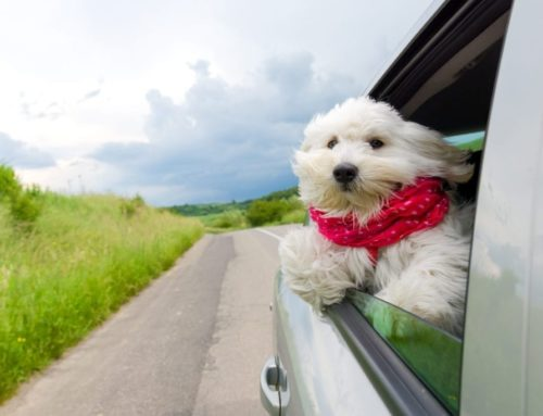 National Pet Travel Safety Day Tips