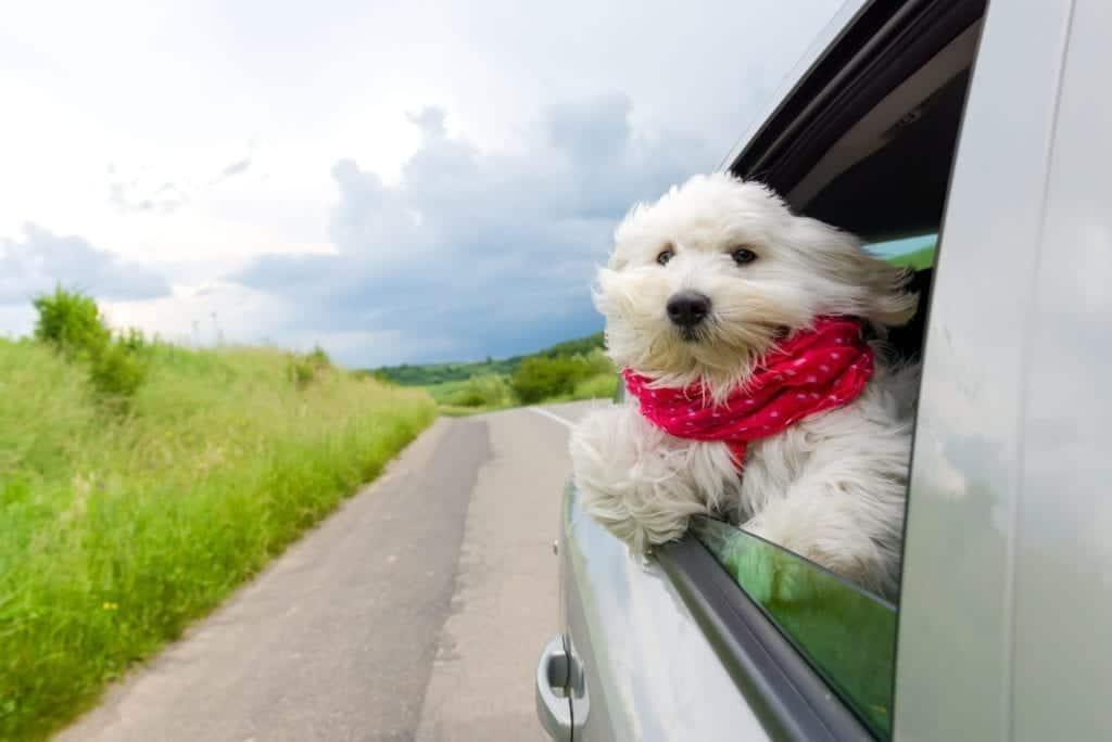 dog-car-anxiety_canna-pet-1024×684