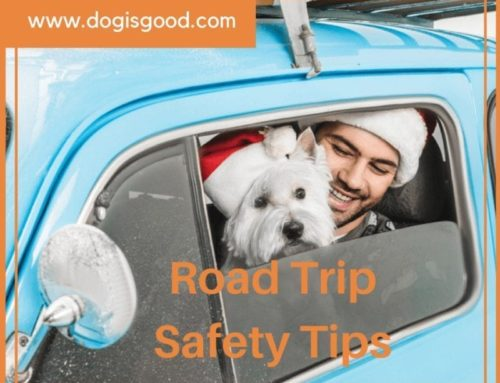 Holiday Road Trip Travel Tips For Pet Parents