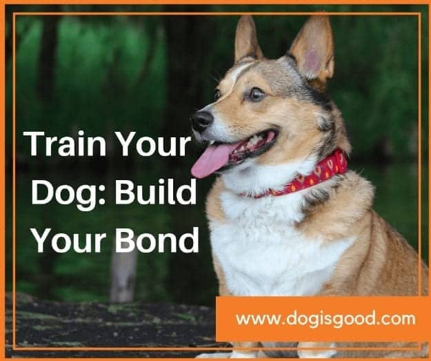 Train Your Dog: Build Your Bond