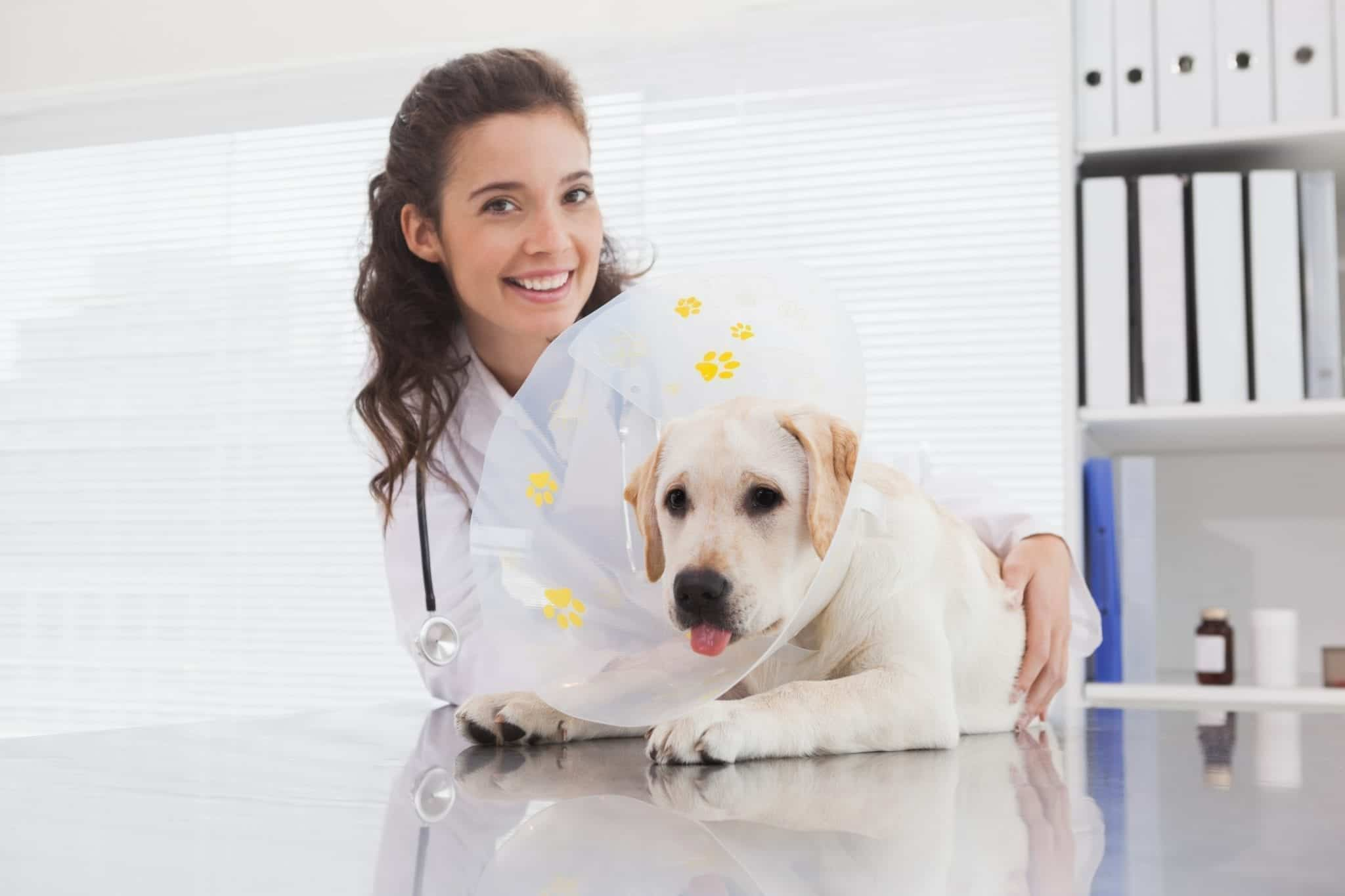 Should Your Pet Be Spayed Or Neutered?