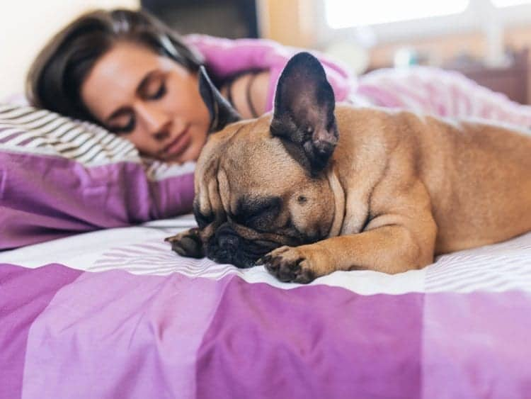 5 Reasons You Should Let Reasons Your Dog Should Sleep with You
