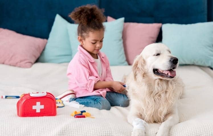 Do You Have A Pet First Aid Kit?
