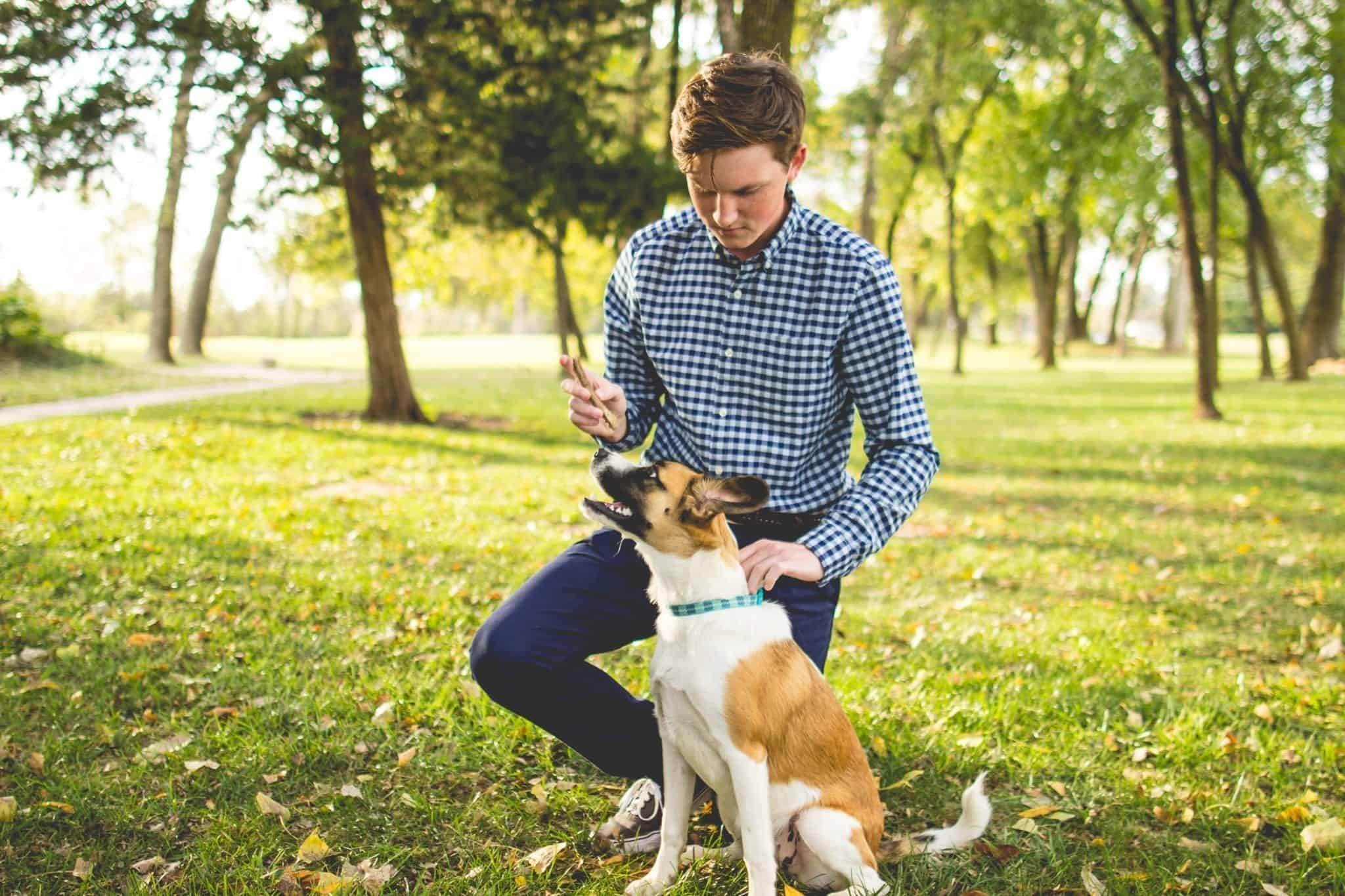 How to bond with an adult rescue dog
