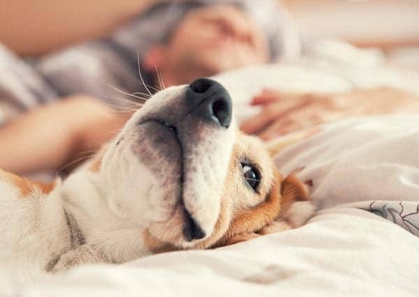 5 Reasons You Should Let Your Dog Sleep with You