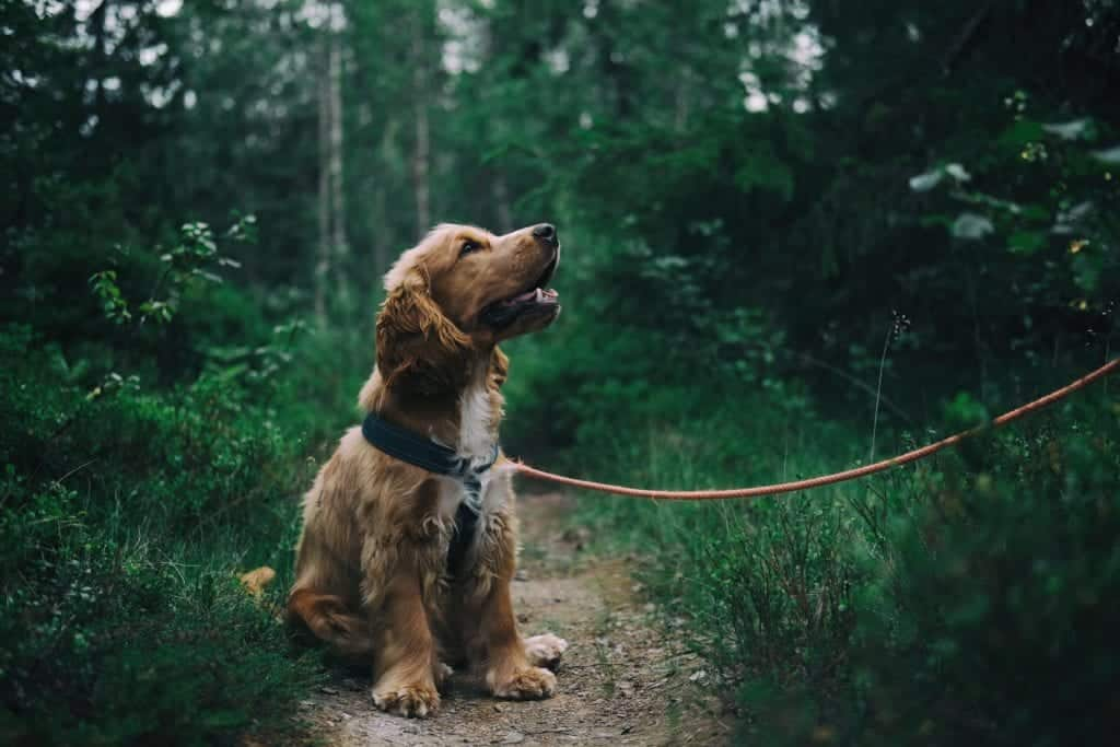 How To Keep Your Dog From Getting Lost