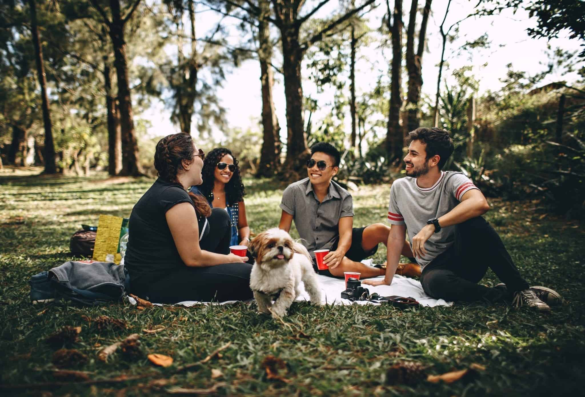 7 Summer Picnic Safety Tips For Pet Parents