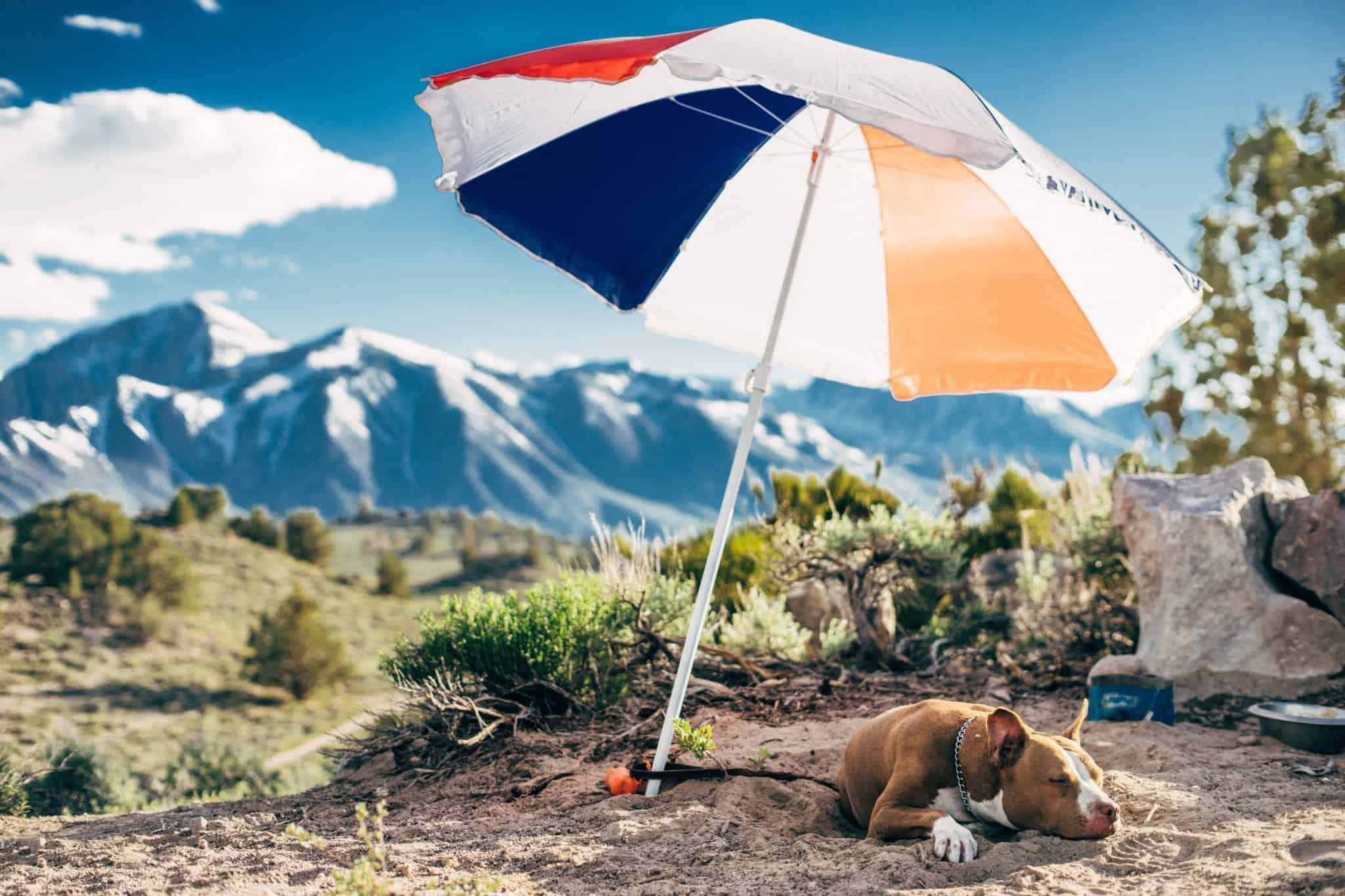 Ways to Protect Your Pets from Summer Heat
