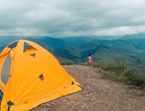 Never Camp Alone: 3 Essential Items For Camping With Your Dog