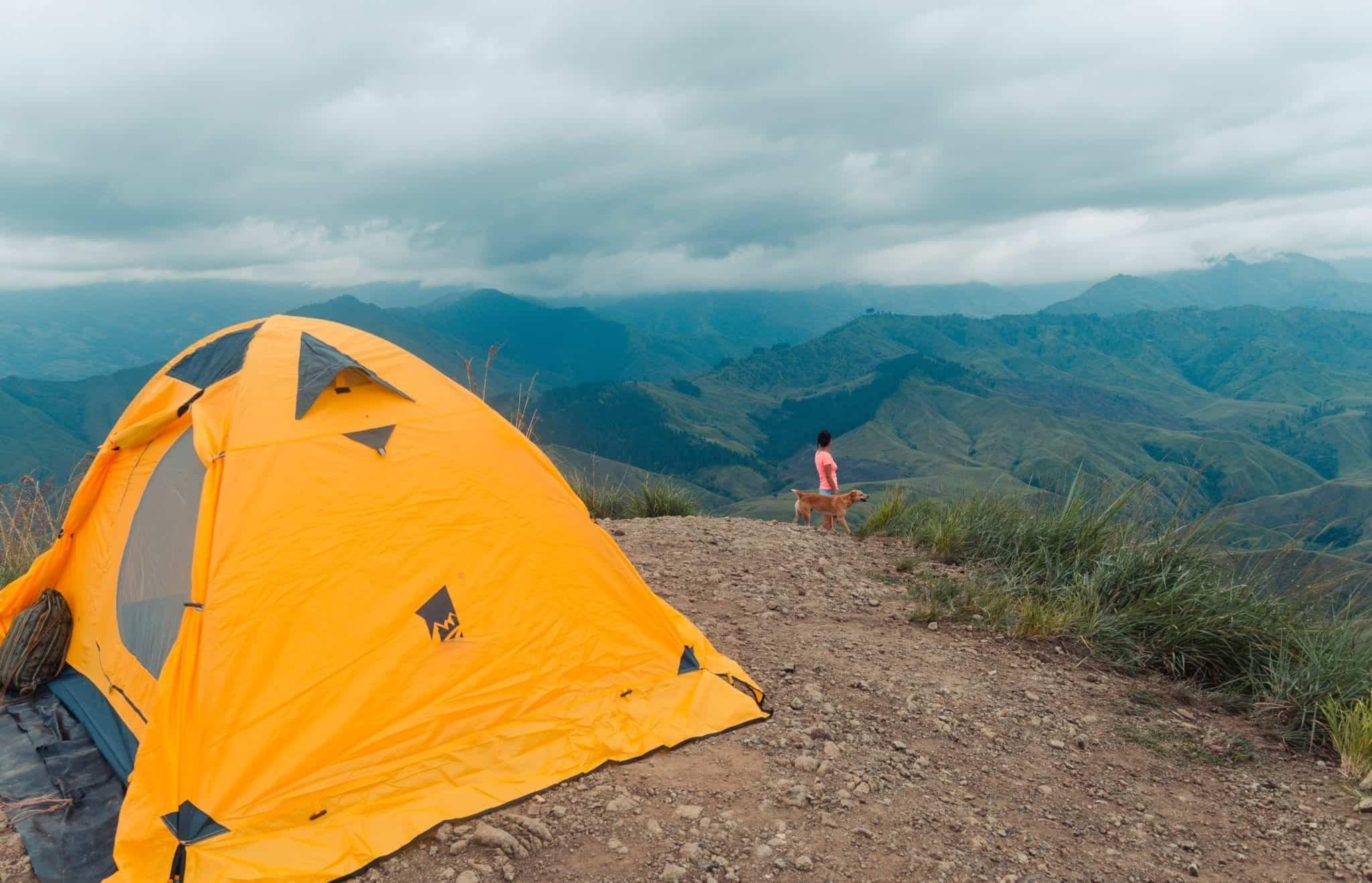adventure-animal-camp-2496880 (1)