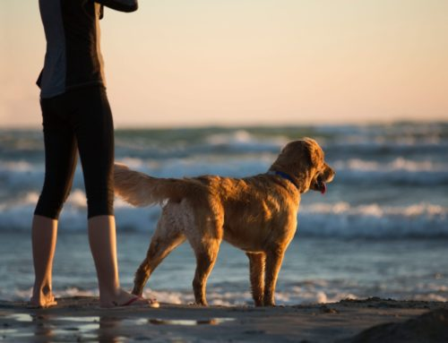 How To Keep Your Dog Safe From Blue-Green Algae