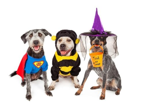Three Fun Things To Do With Your Dog On Halloween