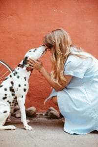Adult Black and White Dalmatian Licking Face of Woman