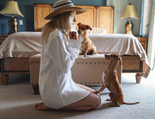 How Training Builds Your Bond With Your Dog