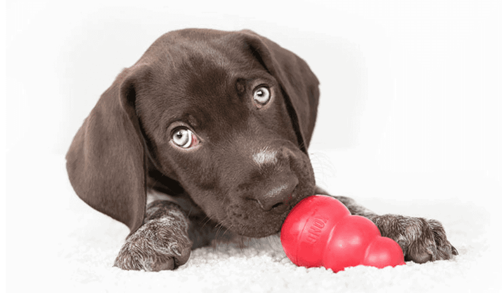dog and kong toy