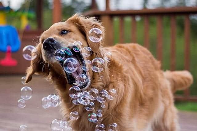 dog-1362144_640