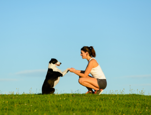 The Well Trained Dog and the Concept of Discipline