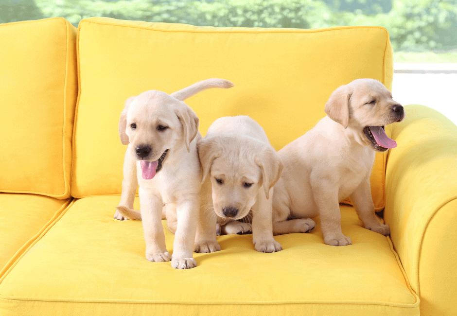 puppyaffect