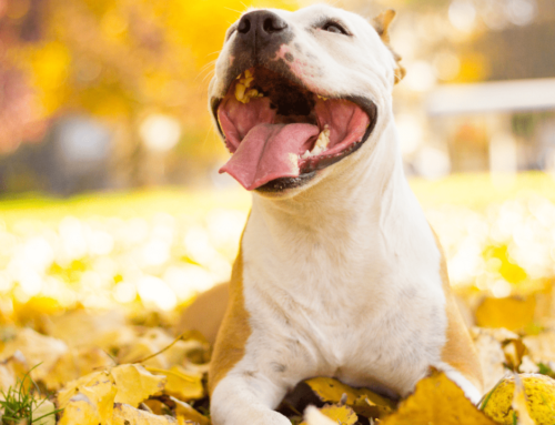 Fun Fall Activities With Fido