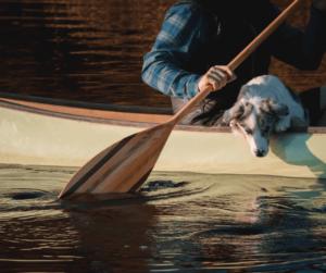 dog in a canoe