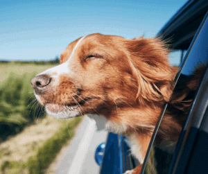 Road-Tripping With Dogs During a Quarantine