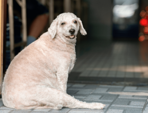 Is Your Dog Curvy?