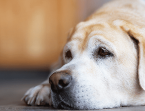 Does Your Dog Have A Case Of The Blues?
