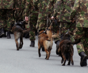 military dogs with their handlers