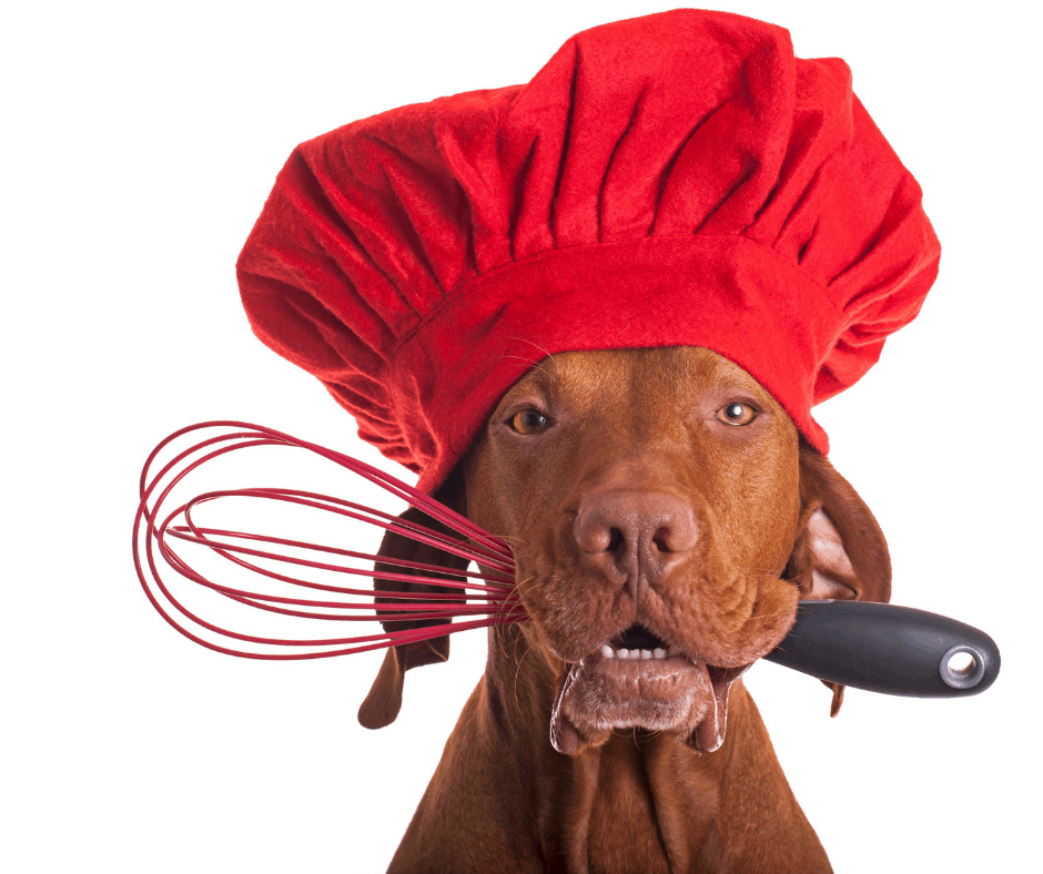 Chef dog with a whisk in mouth