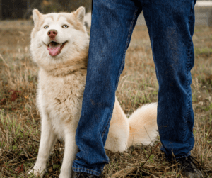 dog leaning against a man's leg