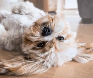 Dog lying on his back