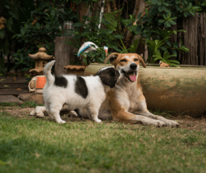 Puppy and adult dog