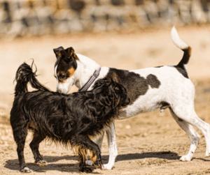 two dogs sniffing